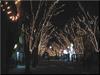電飾が施された街路樹