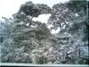 立ち木の雪