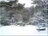 雪と雪囲い