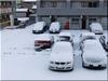 雪降りました。
