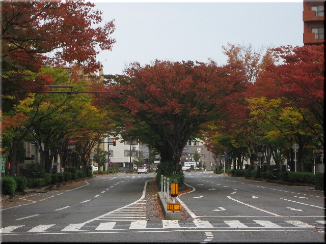 色づいた街路樹