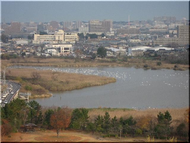 白鳥の飛来した鳥屋野潟