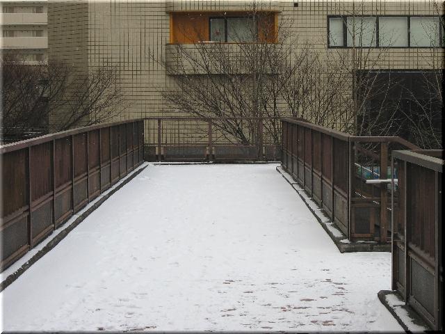初雪(12月26日)