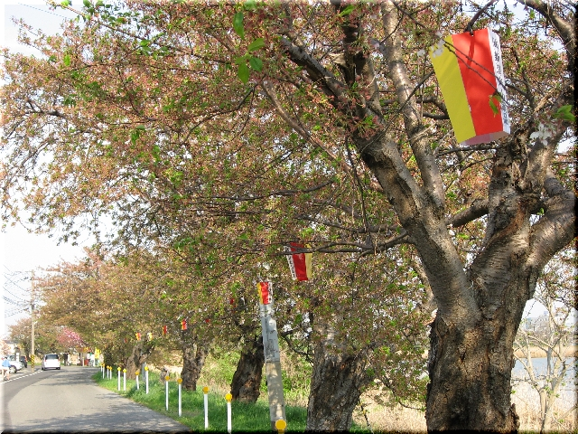葉桜の桜並木